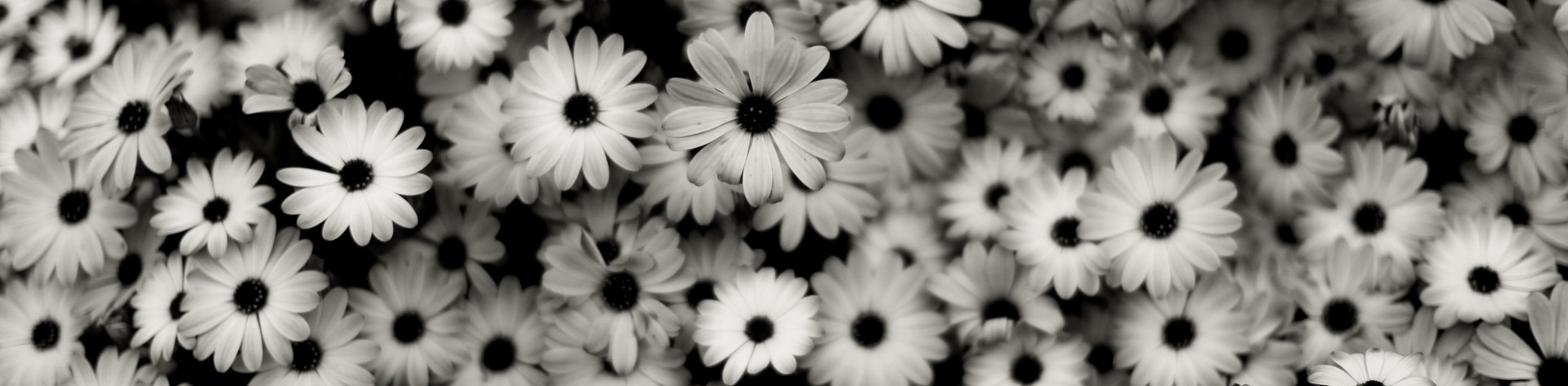 Black And White Flower Wallpaper Tumblr Images Pictures Becuo