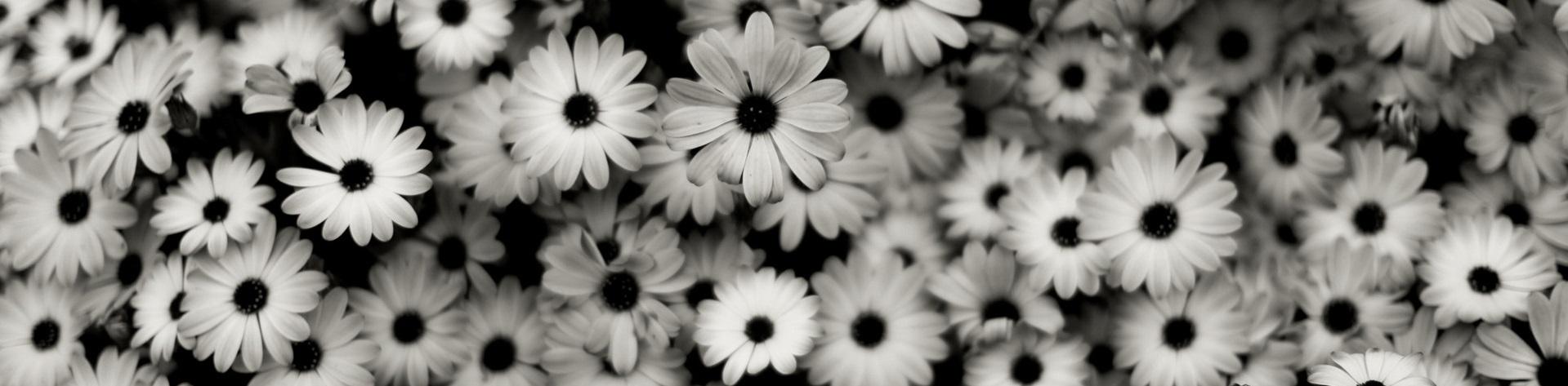 50 Black And White Flower Wallpaper On Wallpapersafari