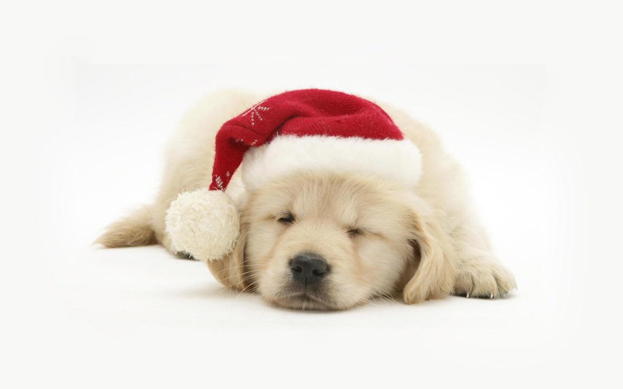собачка в новогодней шапочке  № 1301902 загрузить