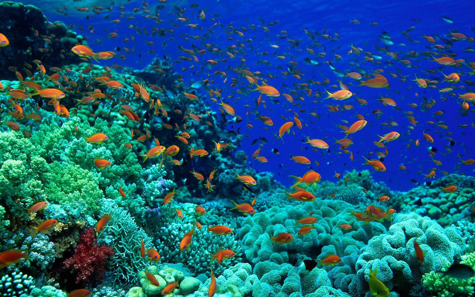 Fish Pictures Ocean Wallpapers Chapter 1   HD Animal 1600x1000