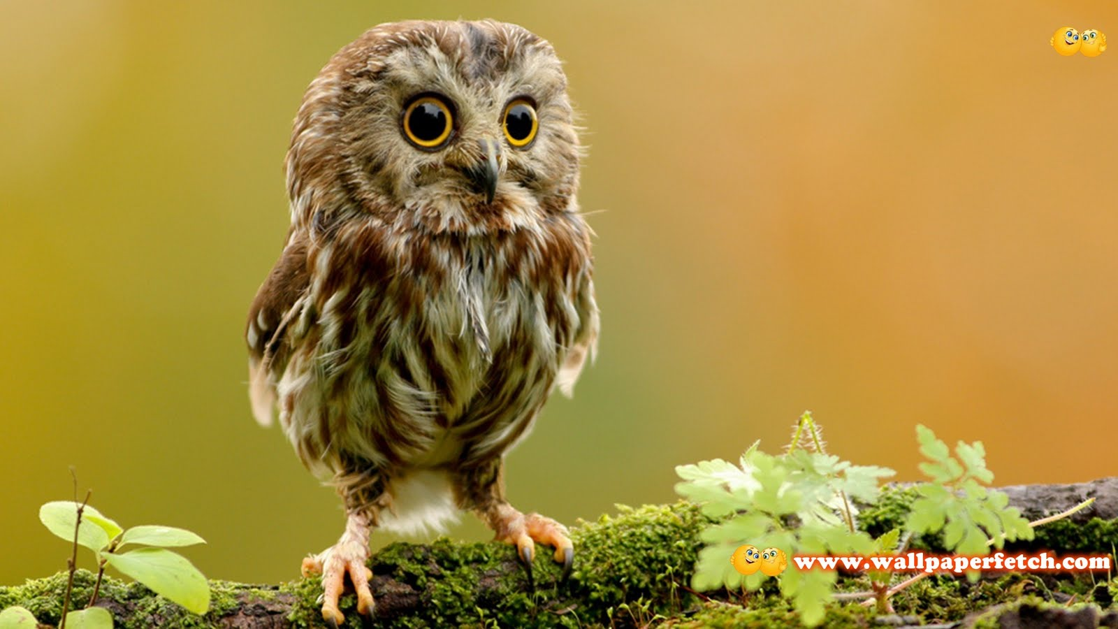 SuperPack Beautiful Animals HD Wallpapers Part 420 1600x900