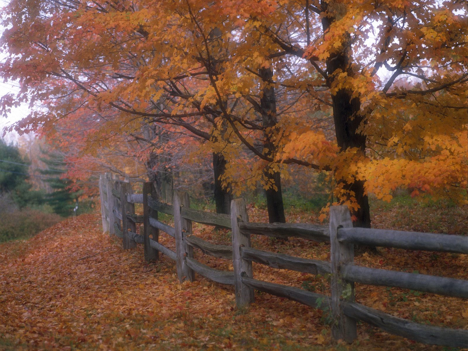 1600x1200 Country fence desktop PC and Mac wallpaper 1600x1200