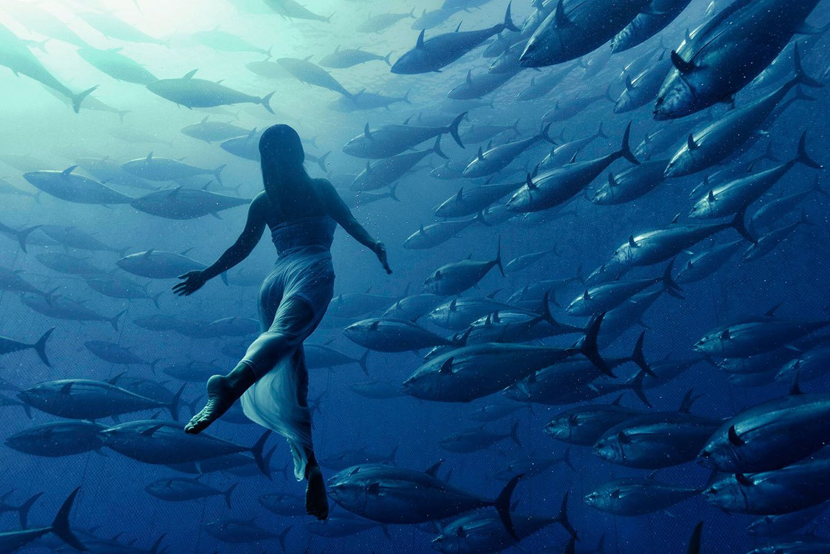 freediving with tuna fish by kurt arrigo Picture of the Day 1200x801