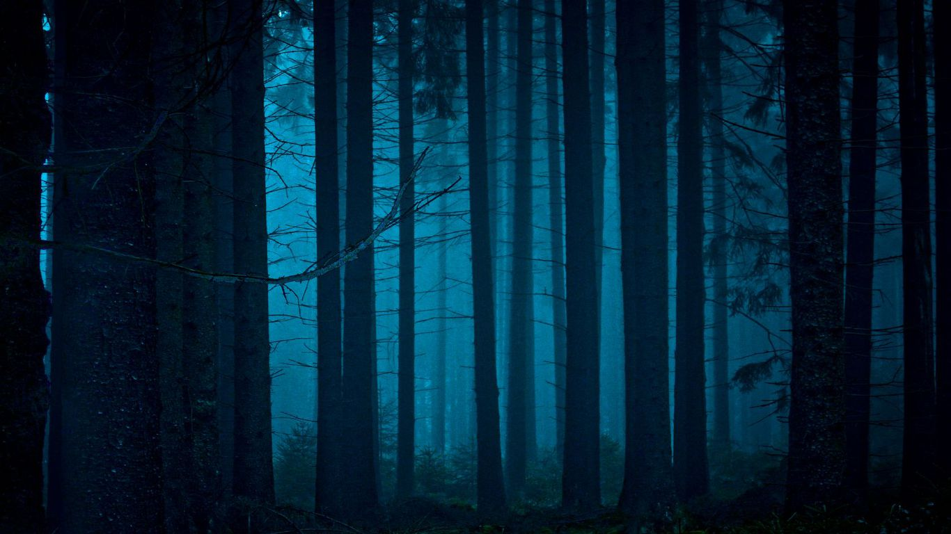 Download Mystical Forest Wallpaper 1366x768 Mystical Forest