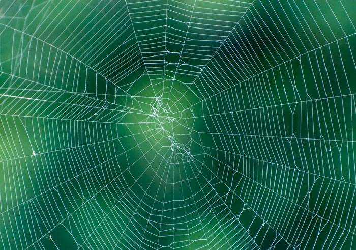 Spider web on abstract blur green background   photos 700x491