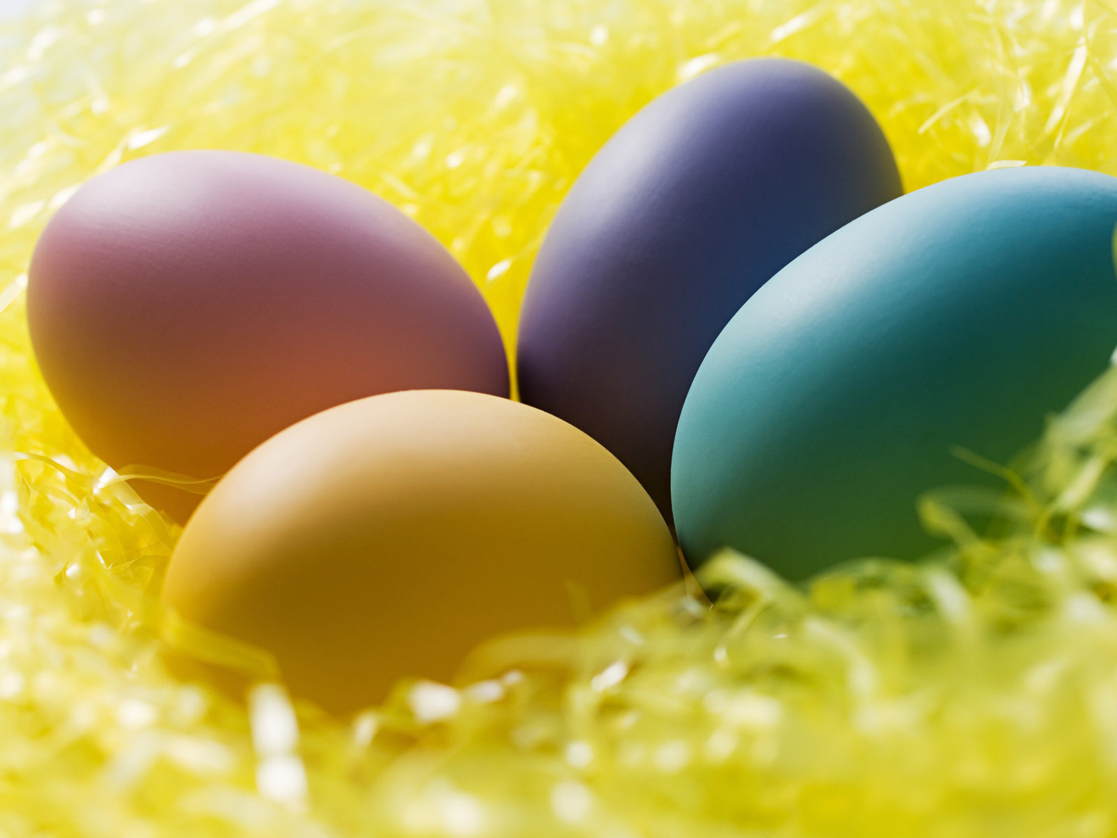 chicks and easter eggs wallpapers for your desktop backgrounds 1600x1200