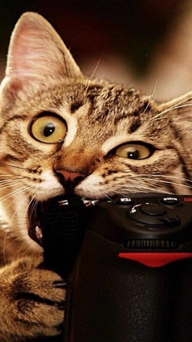 50+ Funny Cat iPhone Wallpaper on WallpaperSafari