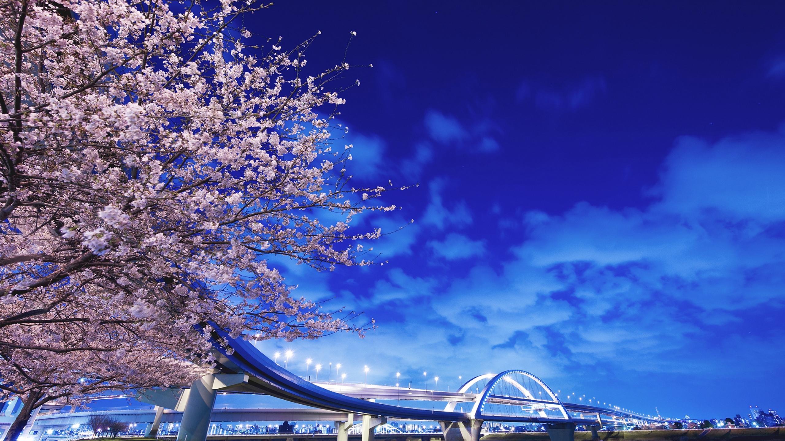 2560x1440 Wallpaper japan hokkaido bridge sakura 2560x1440