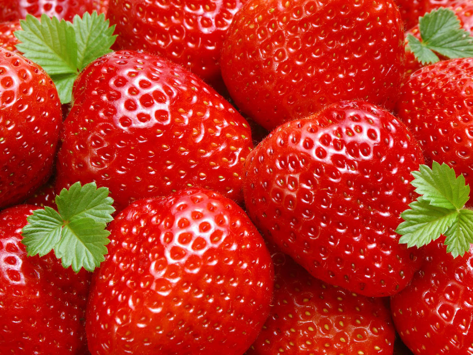 the Strawberry Wallpapers Strawberry Desktop Wallpapers Strawberry 1600x1200