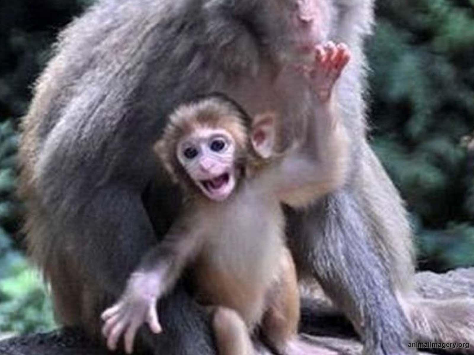 Cute Baby Monkeys Wallpaper
