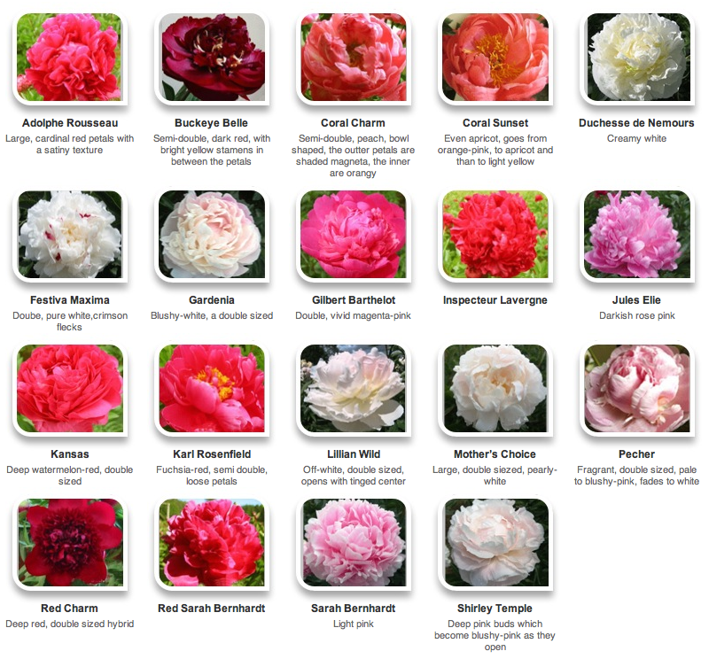Names Of Flowers And Pictures 800x744