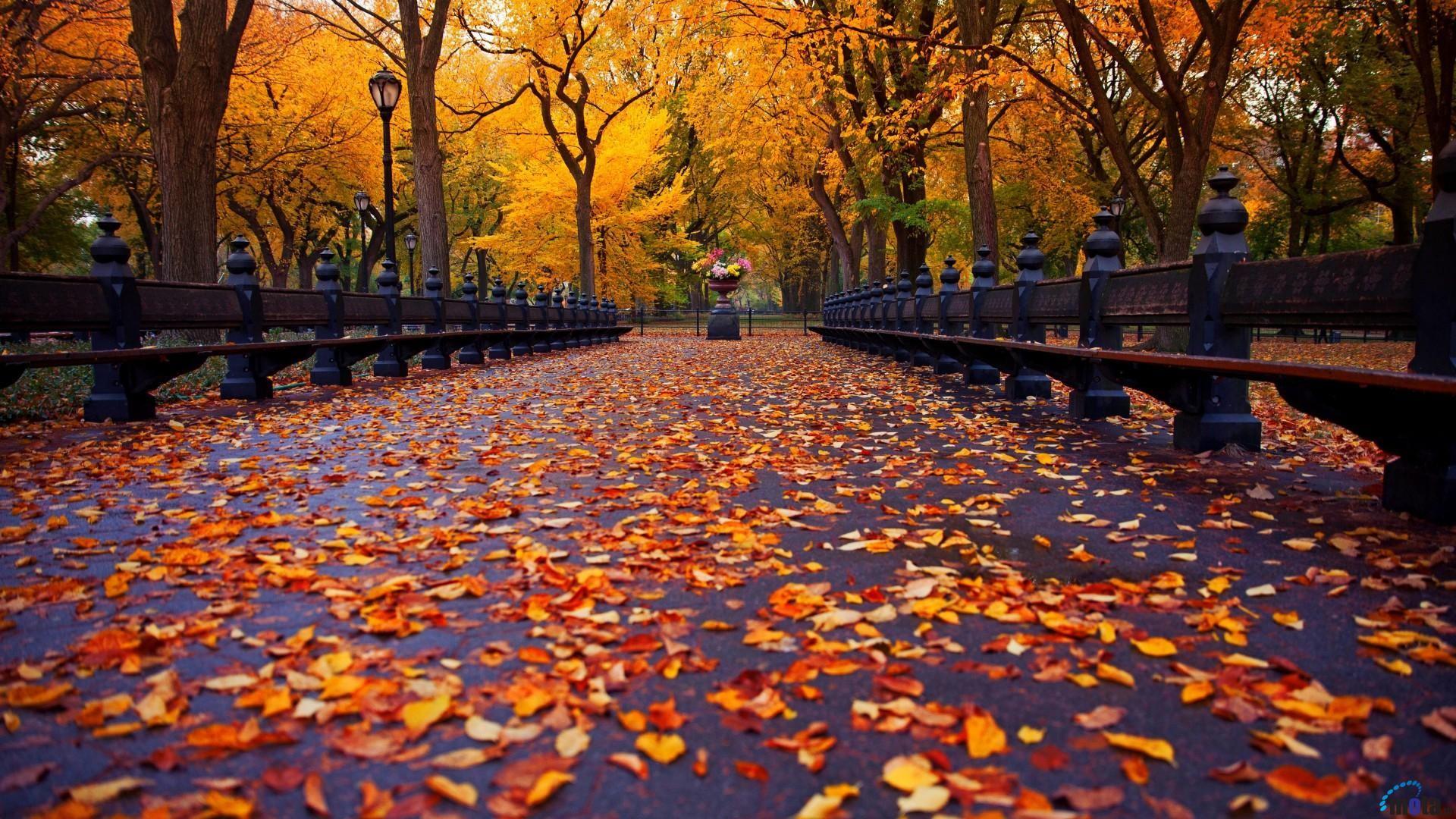 Free Download 58 Autumn Desktop Wallpapers On Wallpaperplay