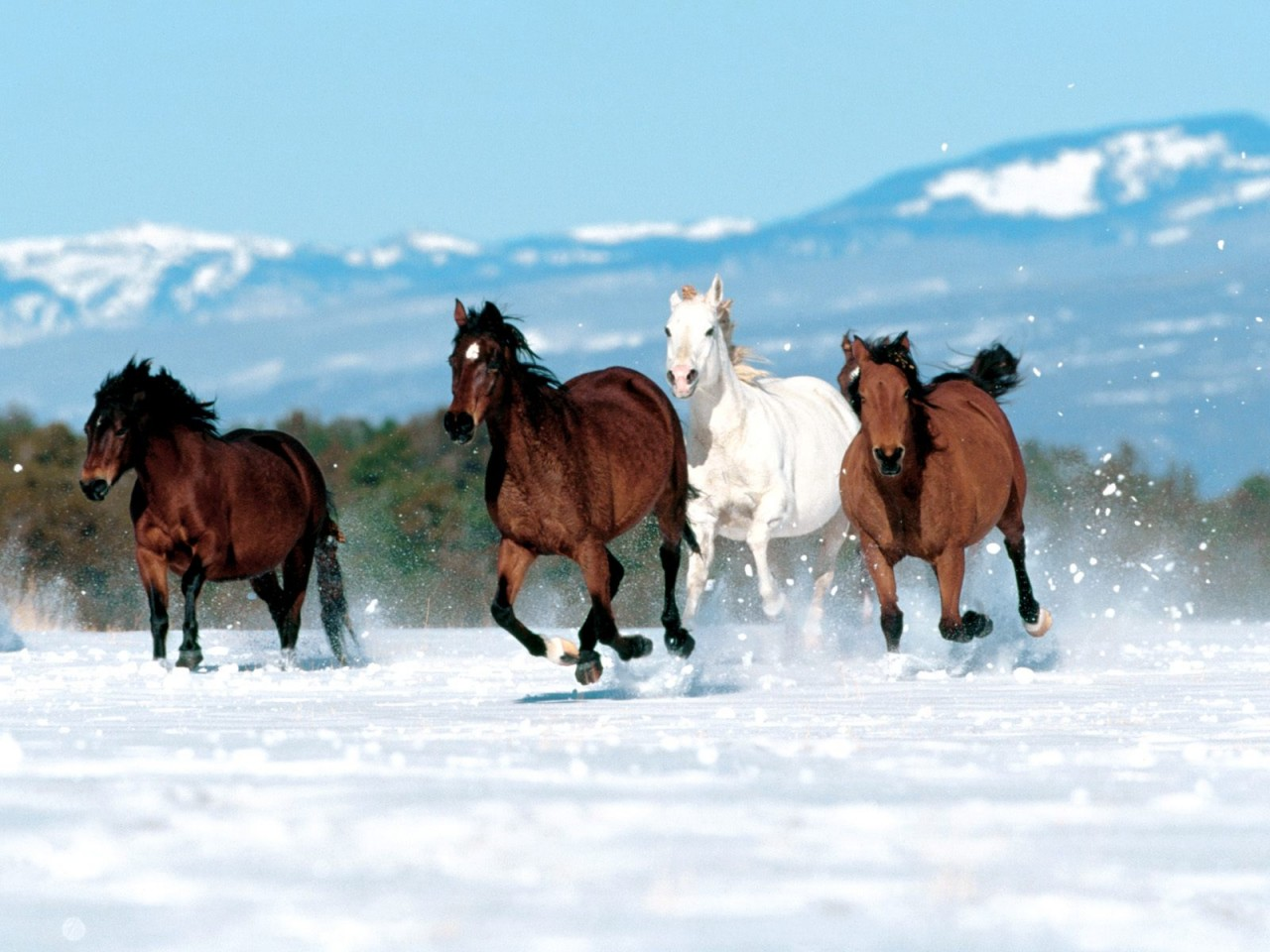 free horse screensavers and wallpaper 1280x960