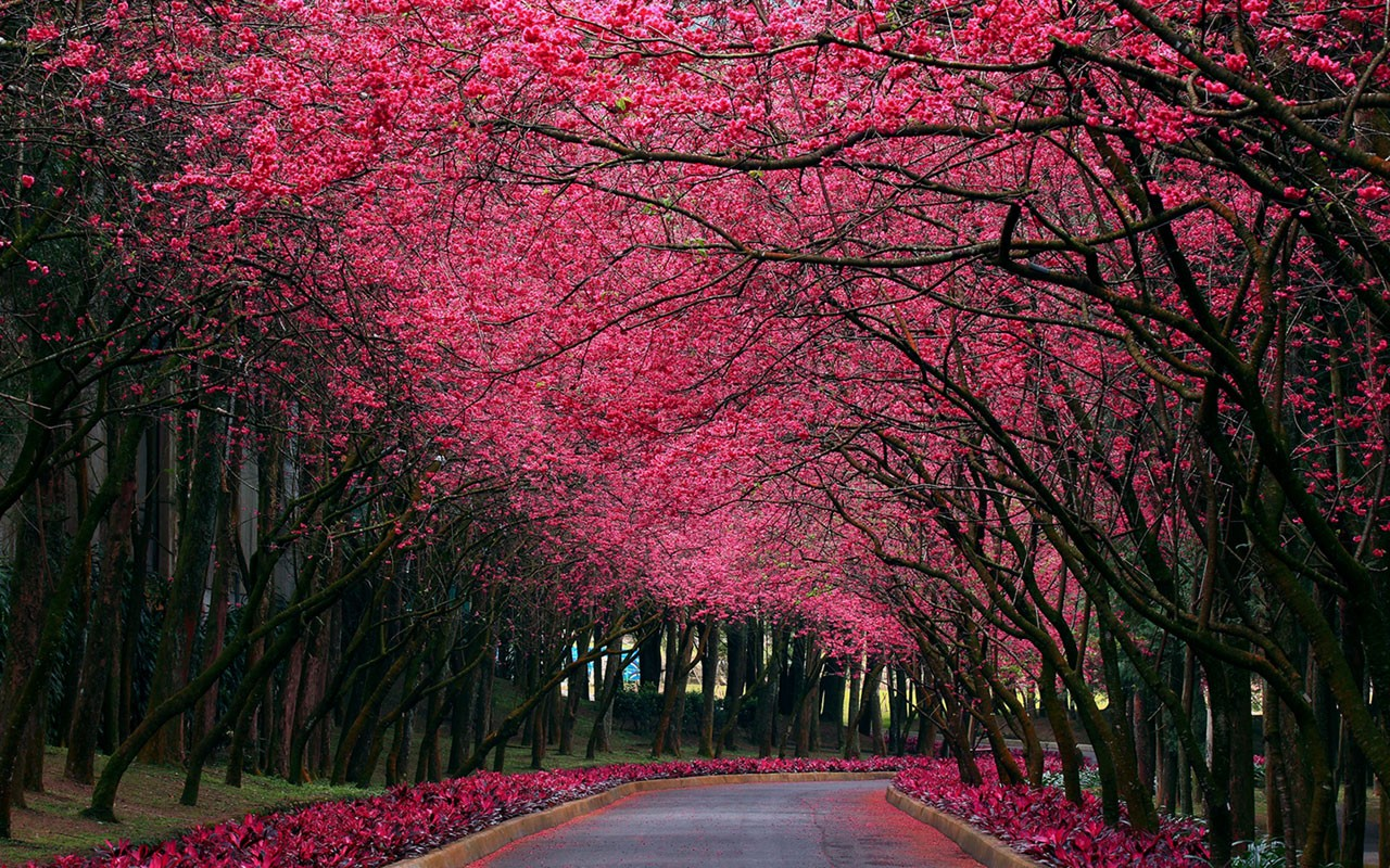 Beautiful Nature Wallpaper For Desktop Download 1280x800