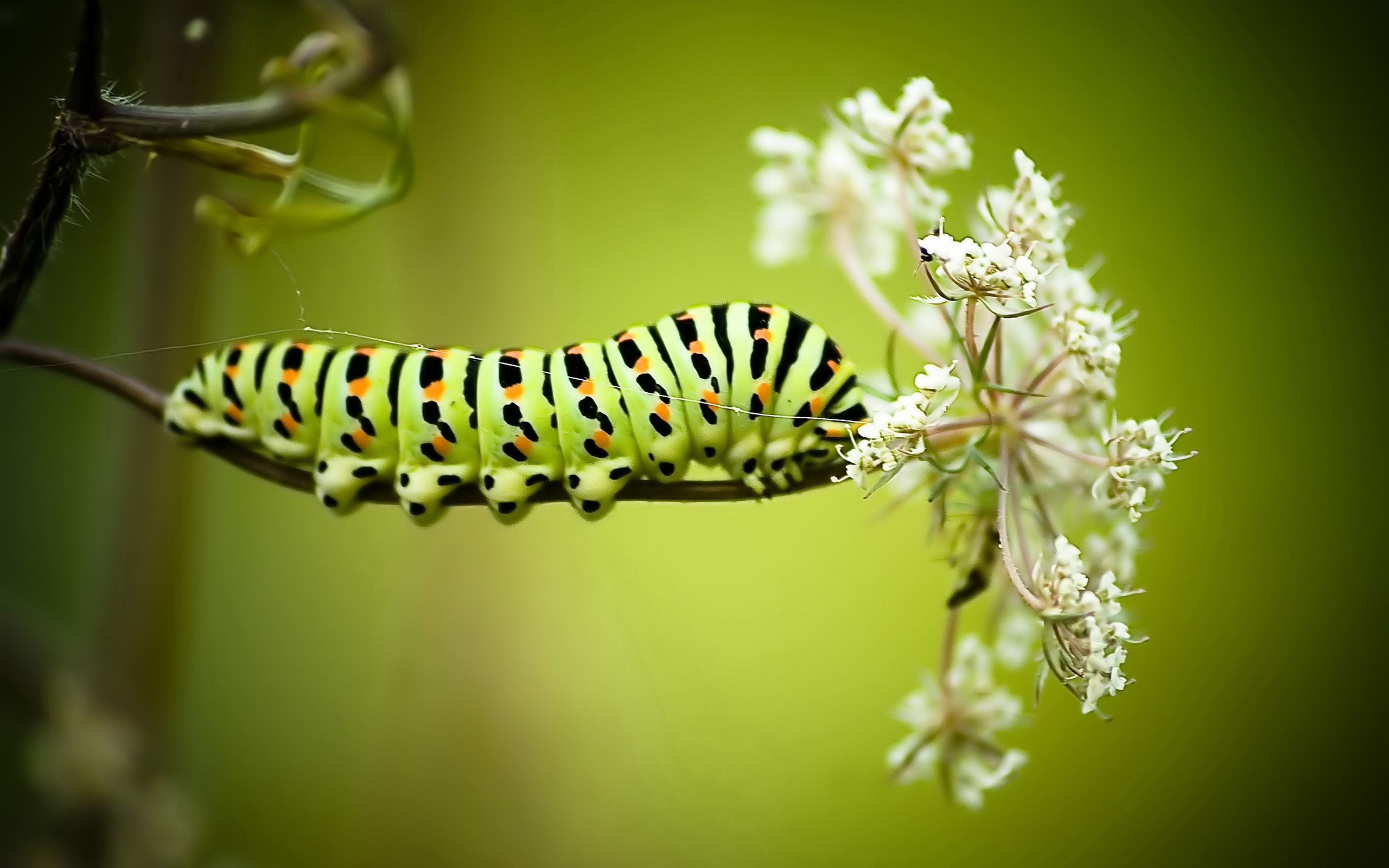 60 Caterpillar HD Wallpapers Backgrounds 2560x1600