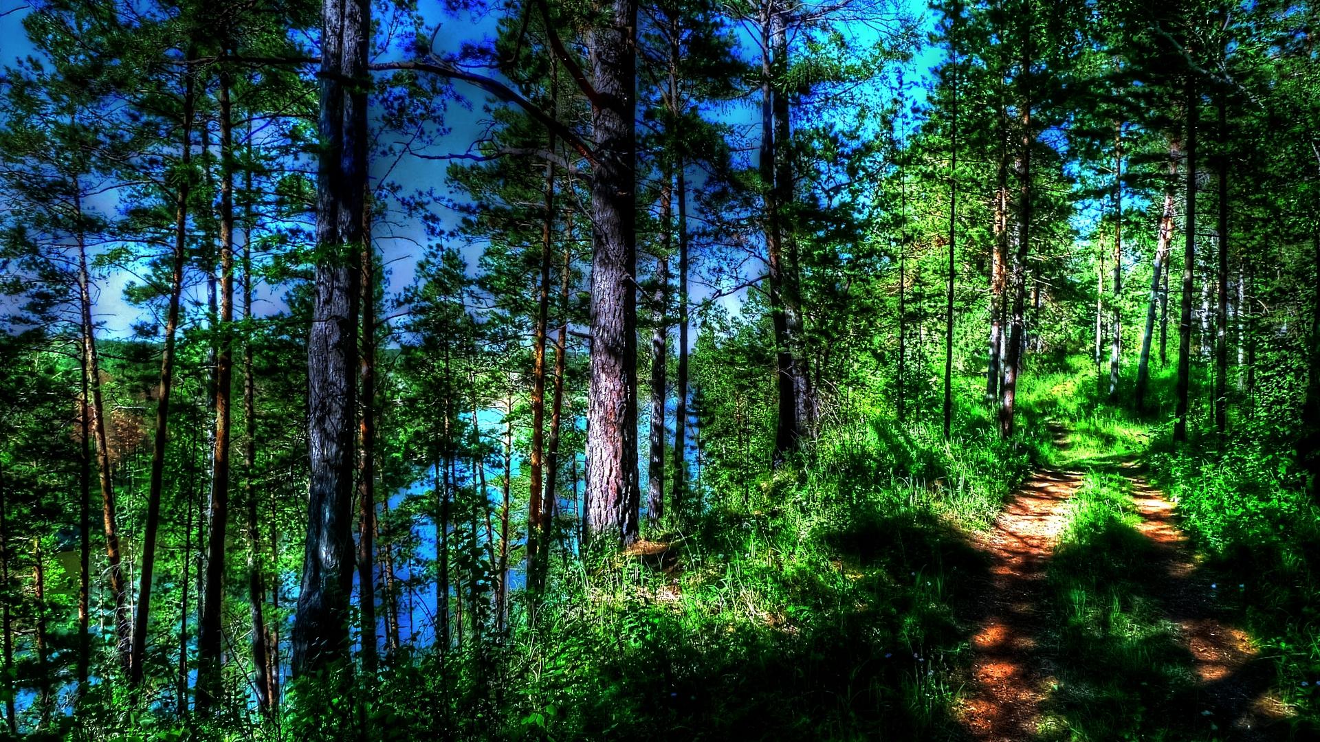 смесь фото леса для смартфона странице много, зато