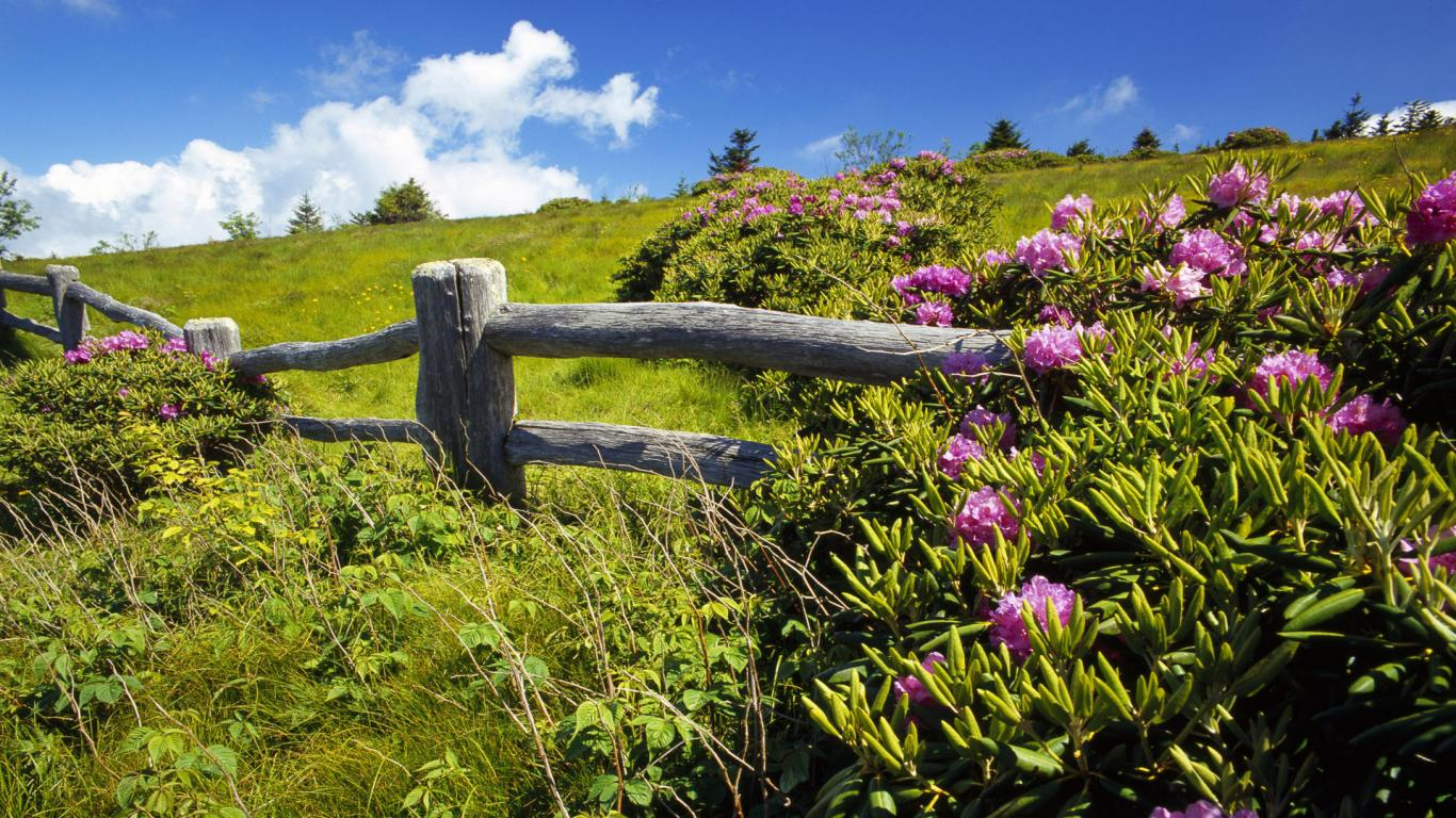 Pics Photos   Beautiful Landscape Hd Desktop Wallpapers 1366x768