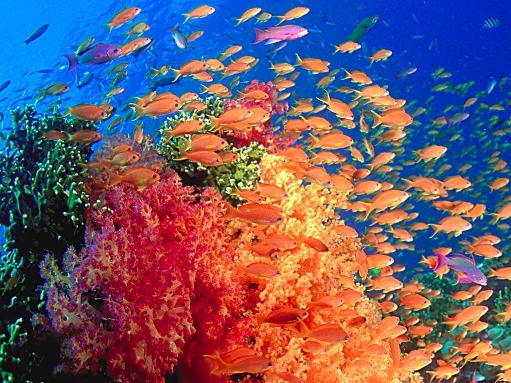 Underwater Sea Life Wallpaper Images amp Pictures   Becuo 1024x768