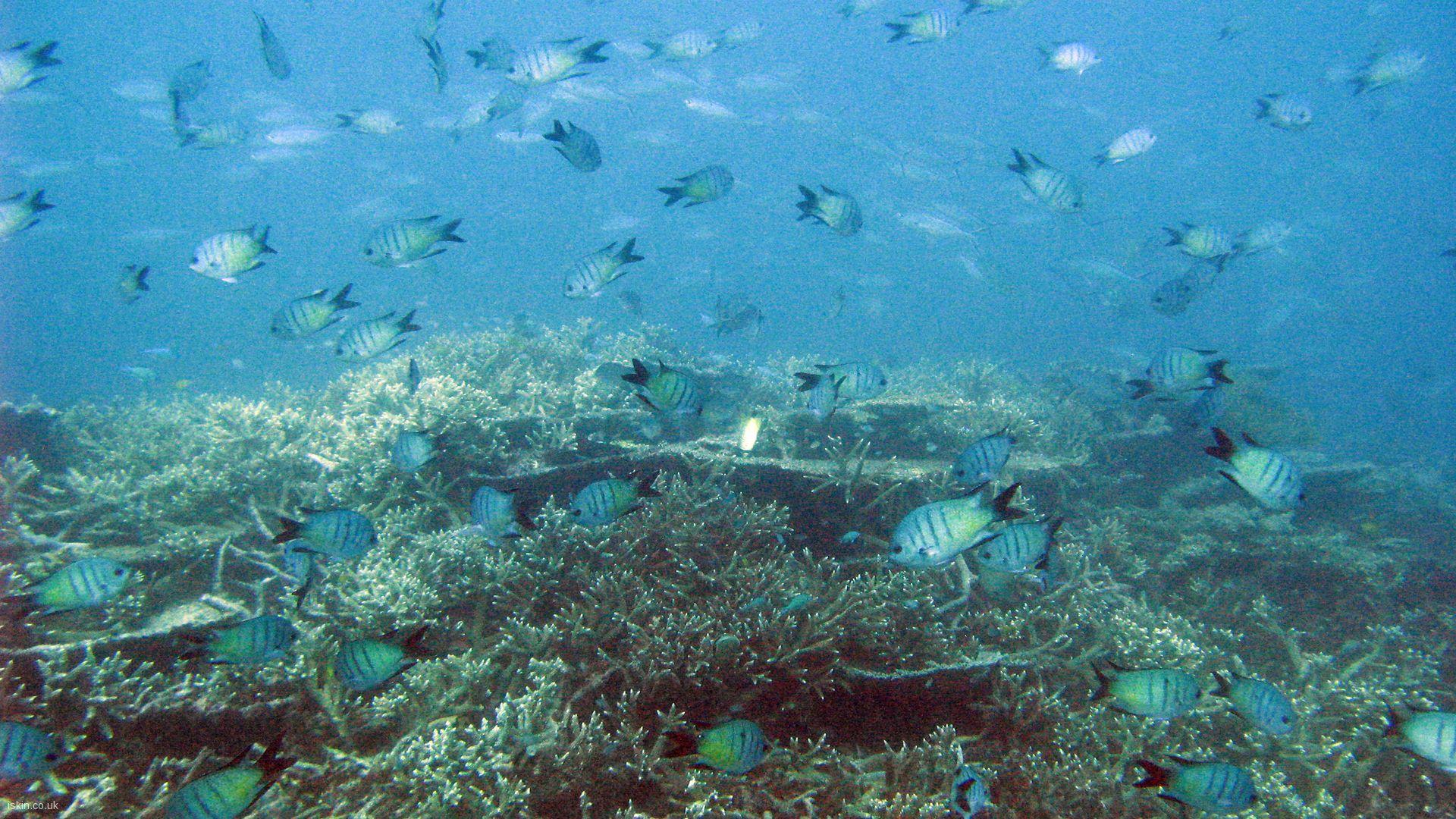 Reef Fish 1920x1080