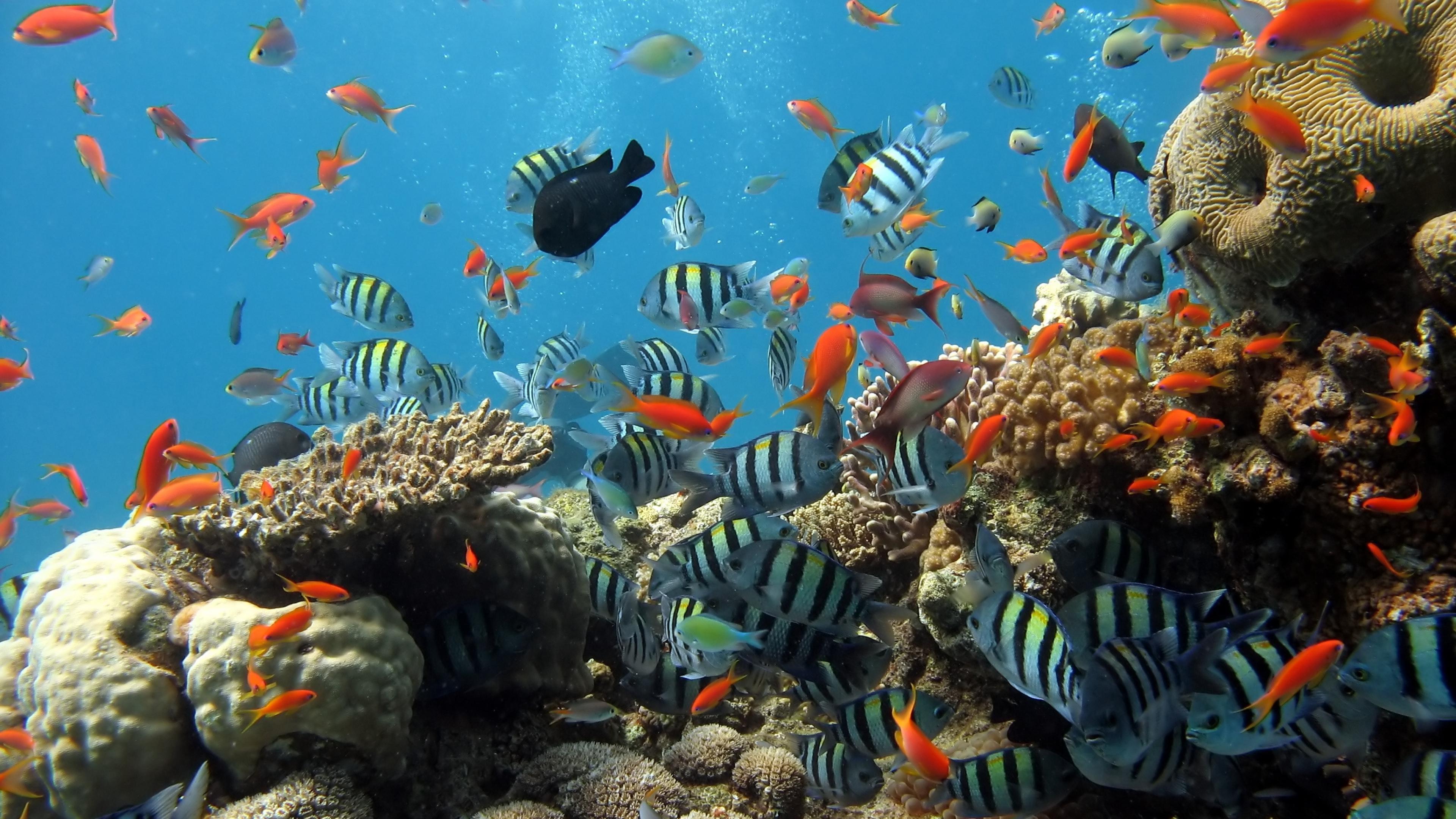 Wallpaper 3840x2160 Underwater Ocean Fish 4K Ultra HD HD Background 3840x2160