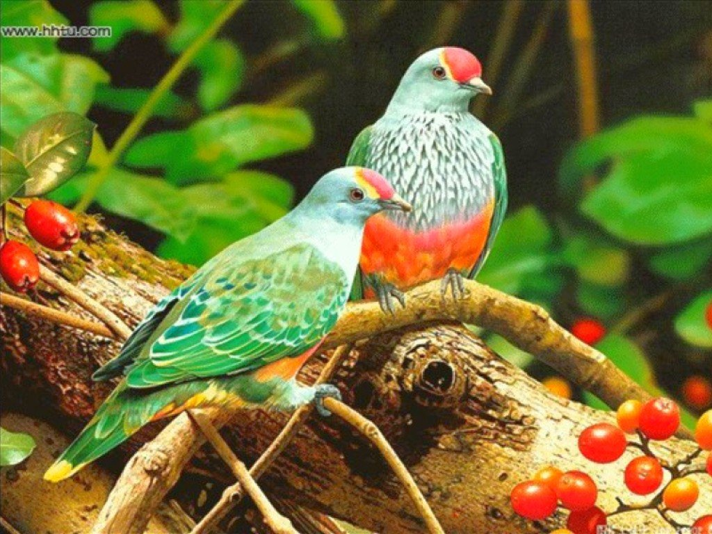 two colorful birds colorful bird blue birds twins colorful birds 1024x768