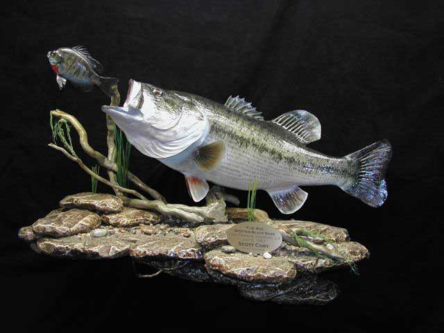 Related Pictures largemouth bass wallpaper border 640x480