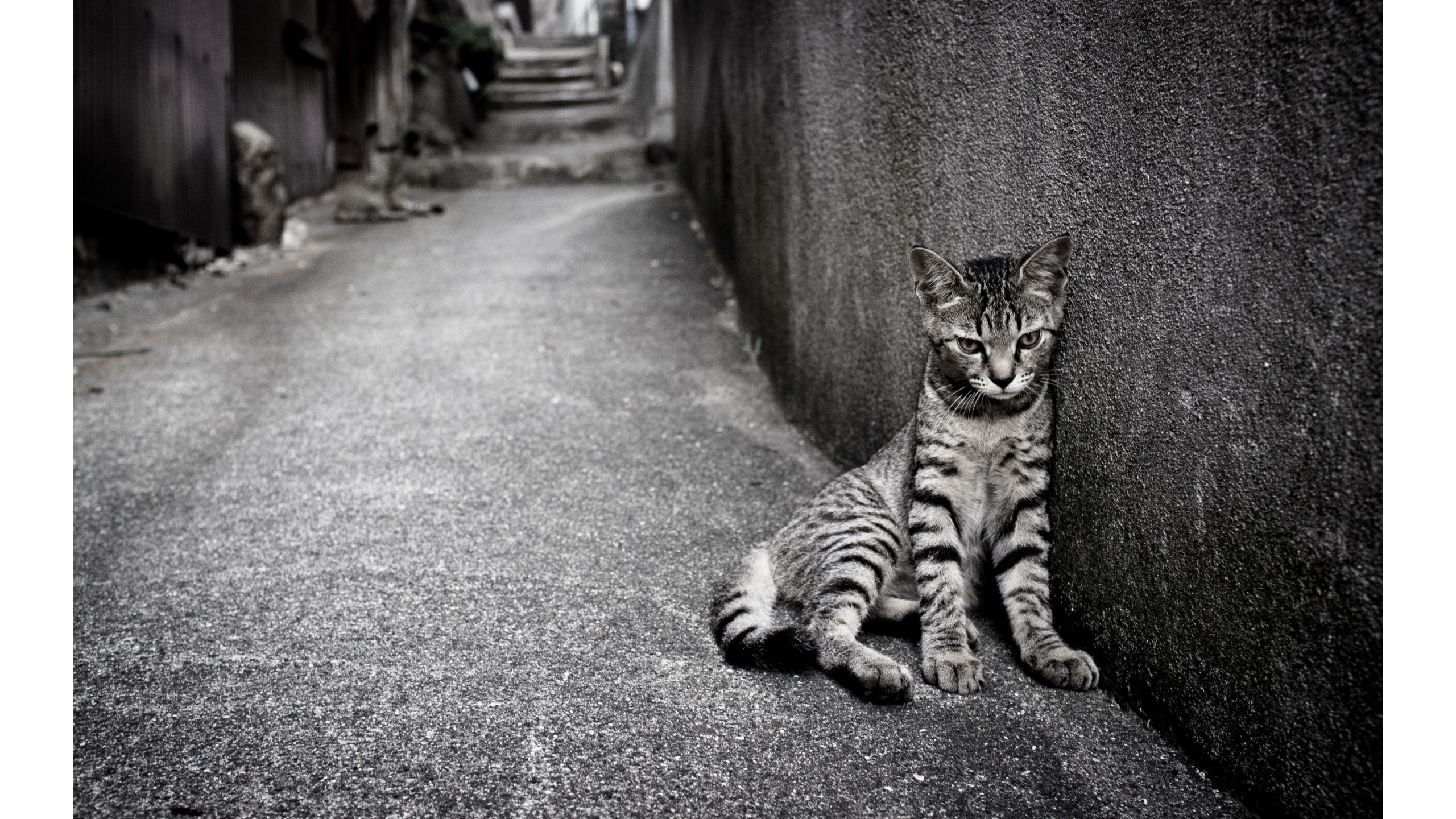 Very Sad Cat   2560x1440   1518235 2560x1440