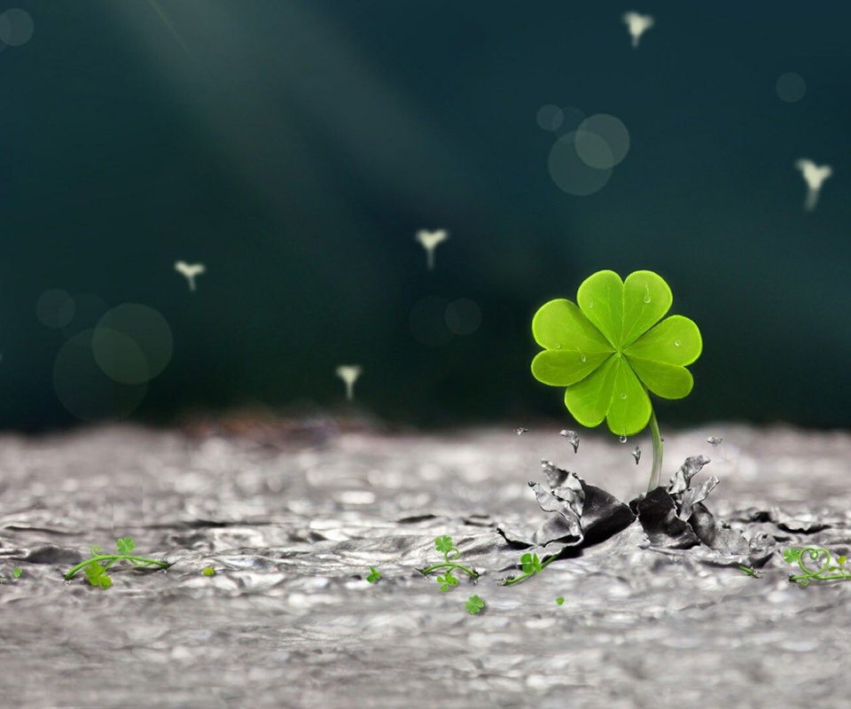 Lucky Four Leaf Clover Wallpaper Background Islamic HD Wallpaper 960x800