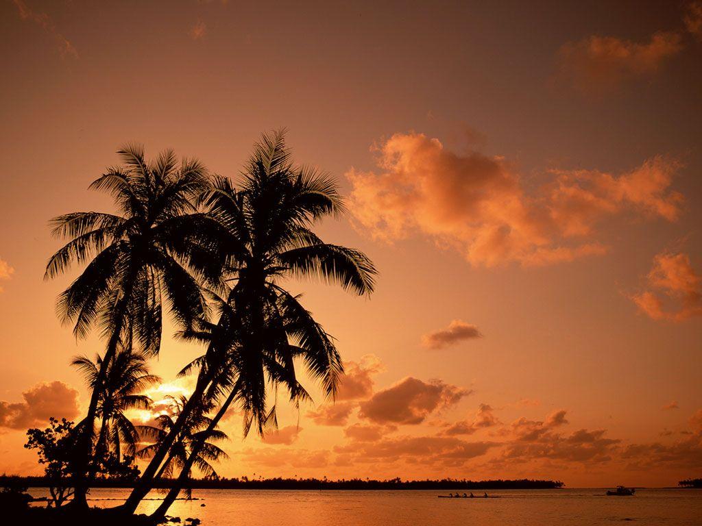 download Palm Tree Sunset wallpaper 1024x768