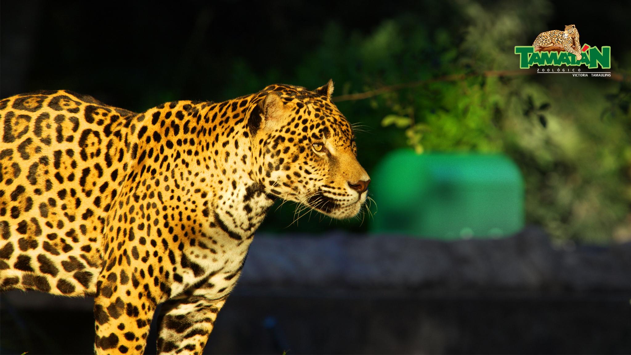 Zoolgico Tamatn Gobierno del Estado de Tamaulipas 2048x1152