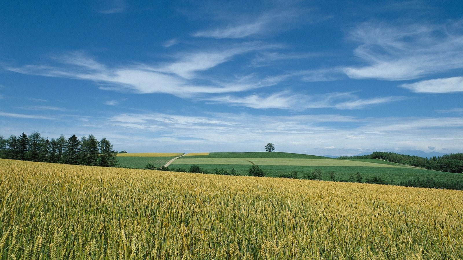 Landscape Hd Wallpapers 1080p: 1080P Landscape Wallpapers