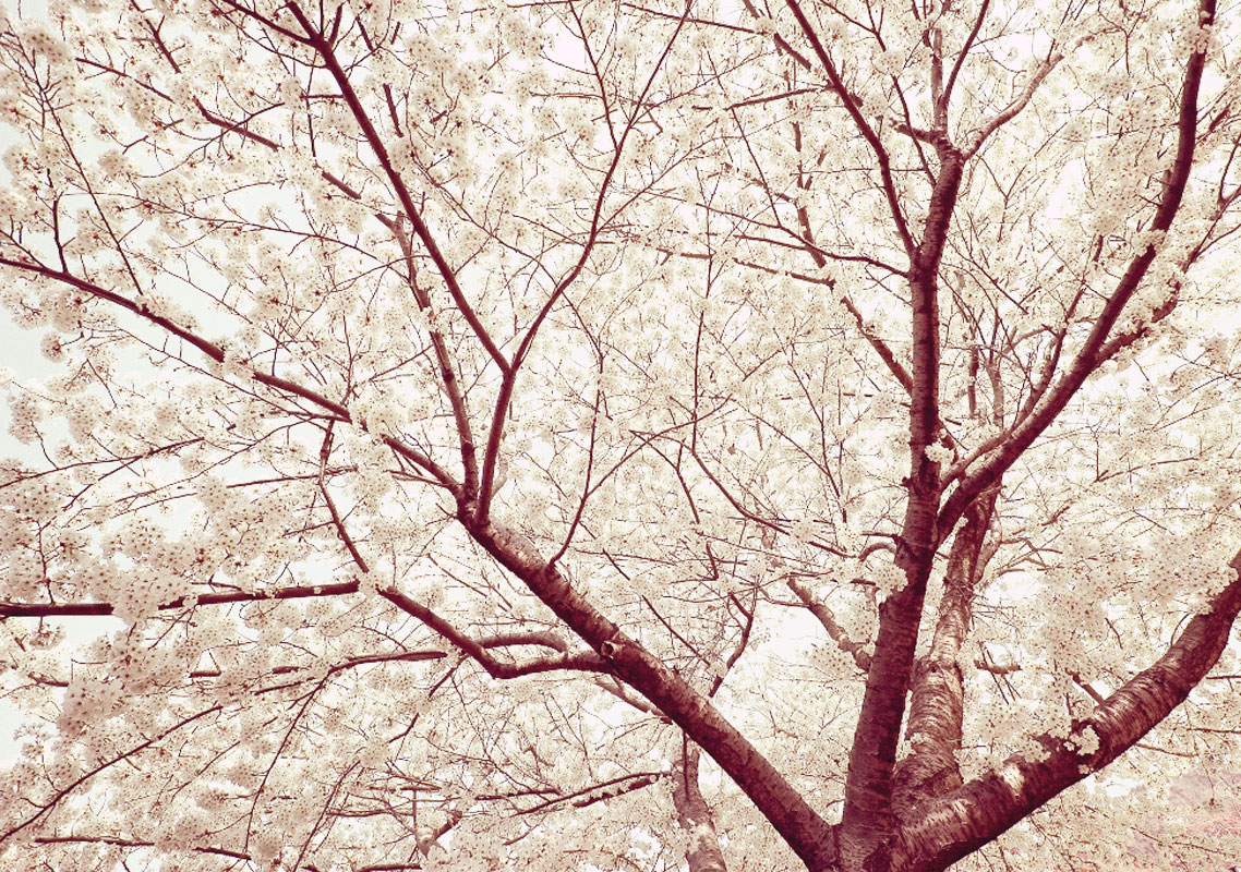 White Tree Branch Tablet Phone Wallpaper Background 1138x800