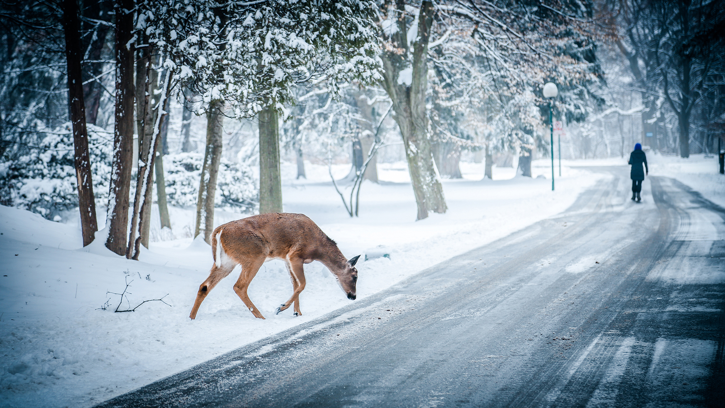 75+] Wallpaper Desktop Winter Scenes on WallpaperSafari