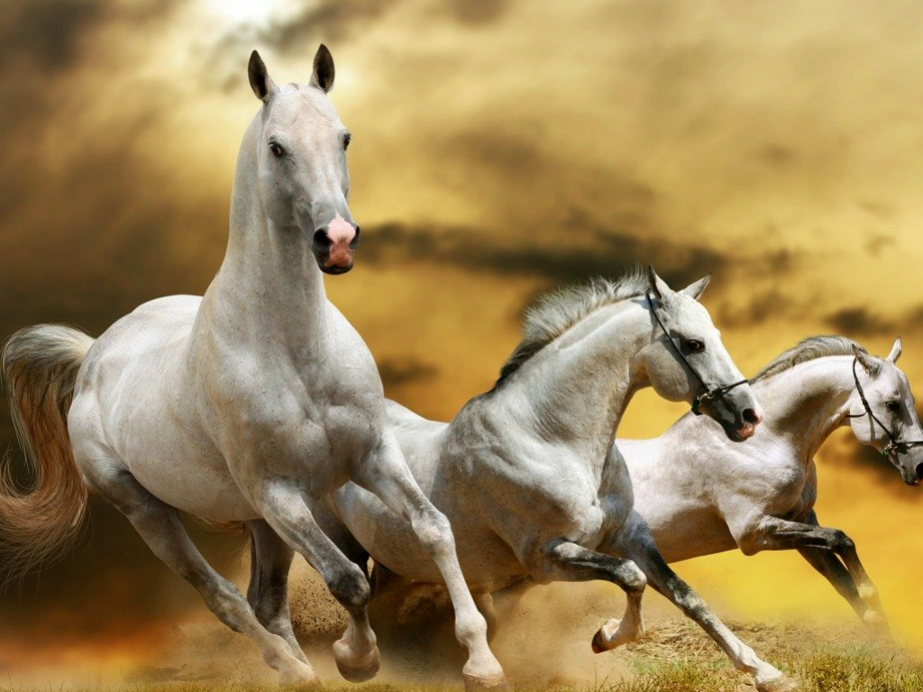 Free Download Horse Desktop Backgrounds One Hd Wallpaper Pictures