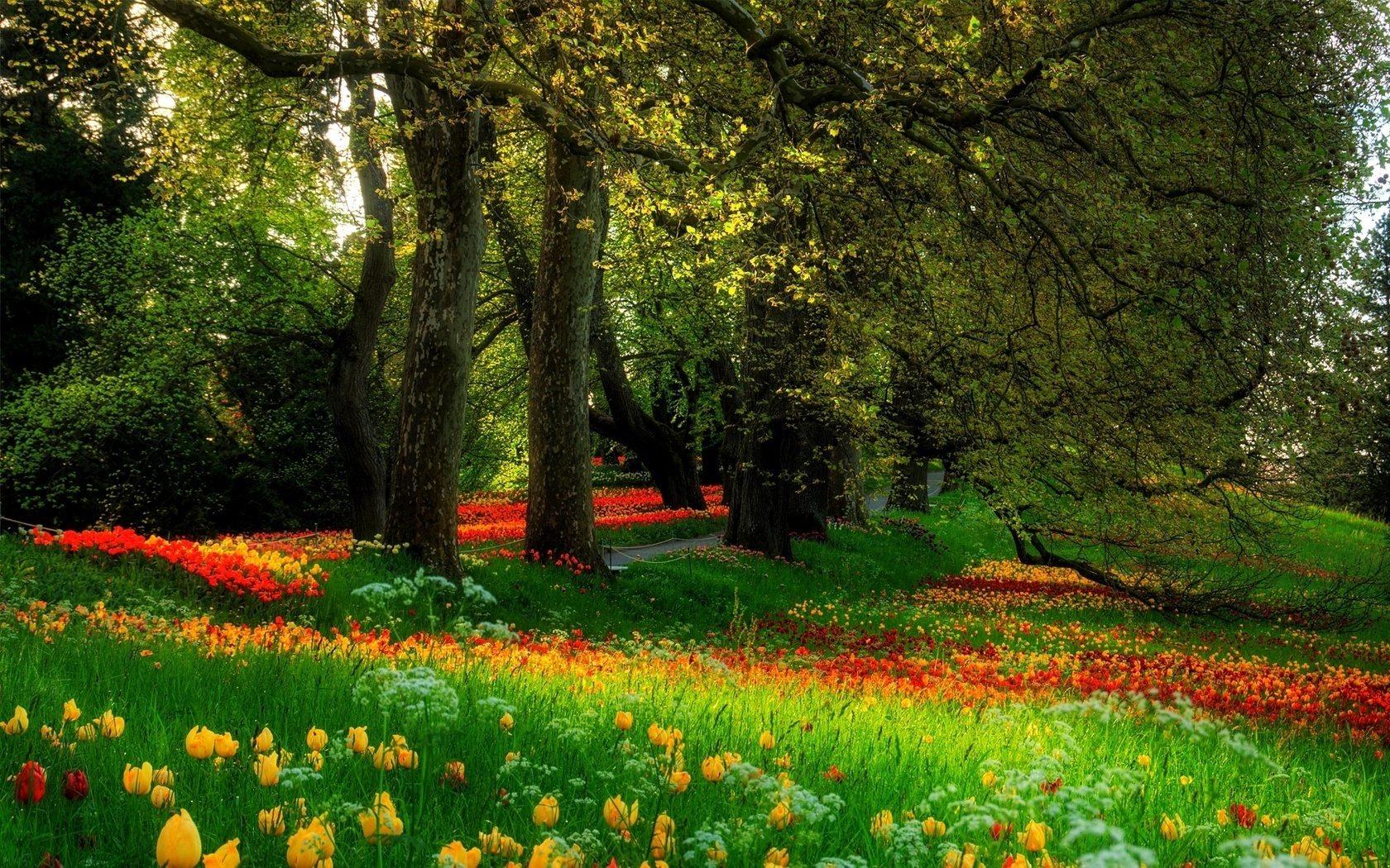 beautiful scenery wallpaper flower wallpapers - wallpapersafari
