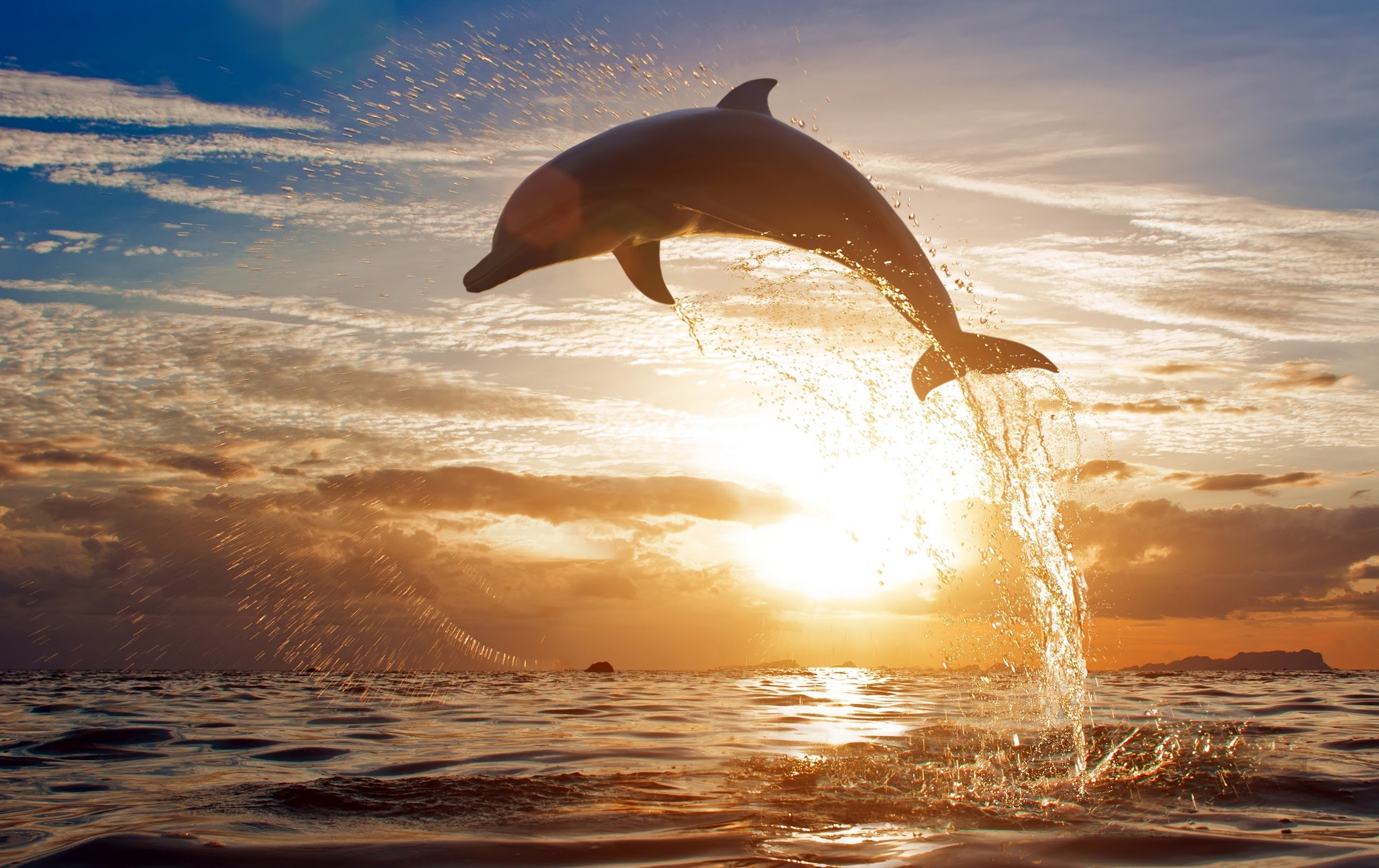 Daily Wallpaper Freedom of Dolphins I Like To Waste My Time 2560x1612
