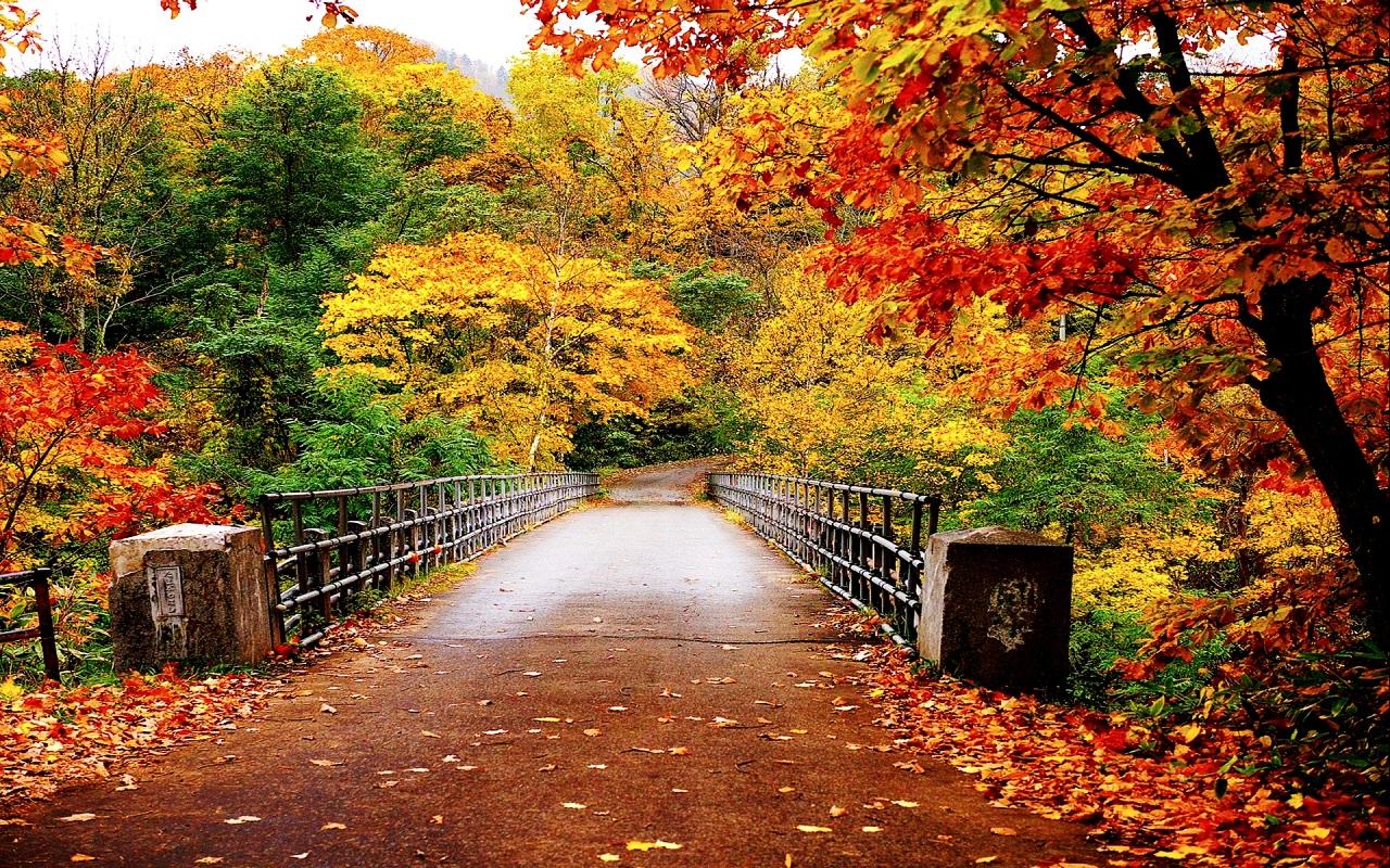 Autumn Wallpaper   Autumn Wallpaper 35867750 1280x800