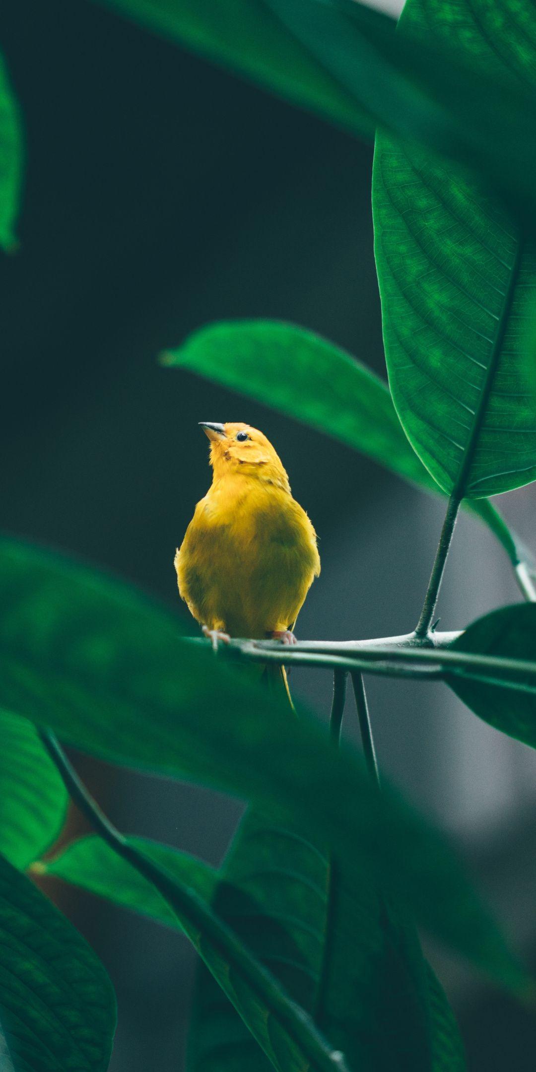 Small cute yellow bird tree branch 1080x2160 wallpaper Birds 1080x2160