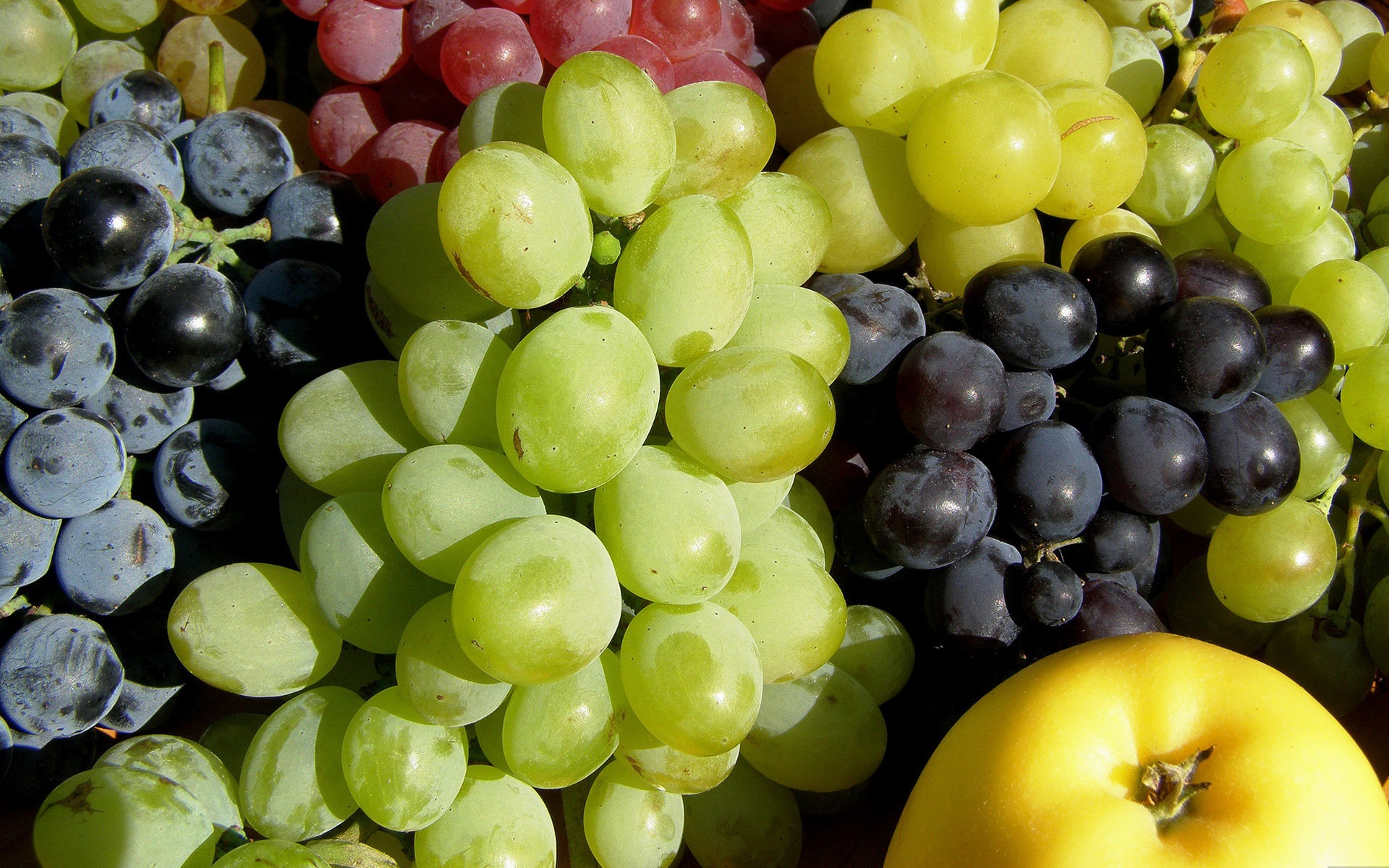Grapes and apple Wallpapers Grapes and apple Backgrounds Grapes and 1920x1200