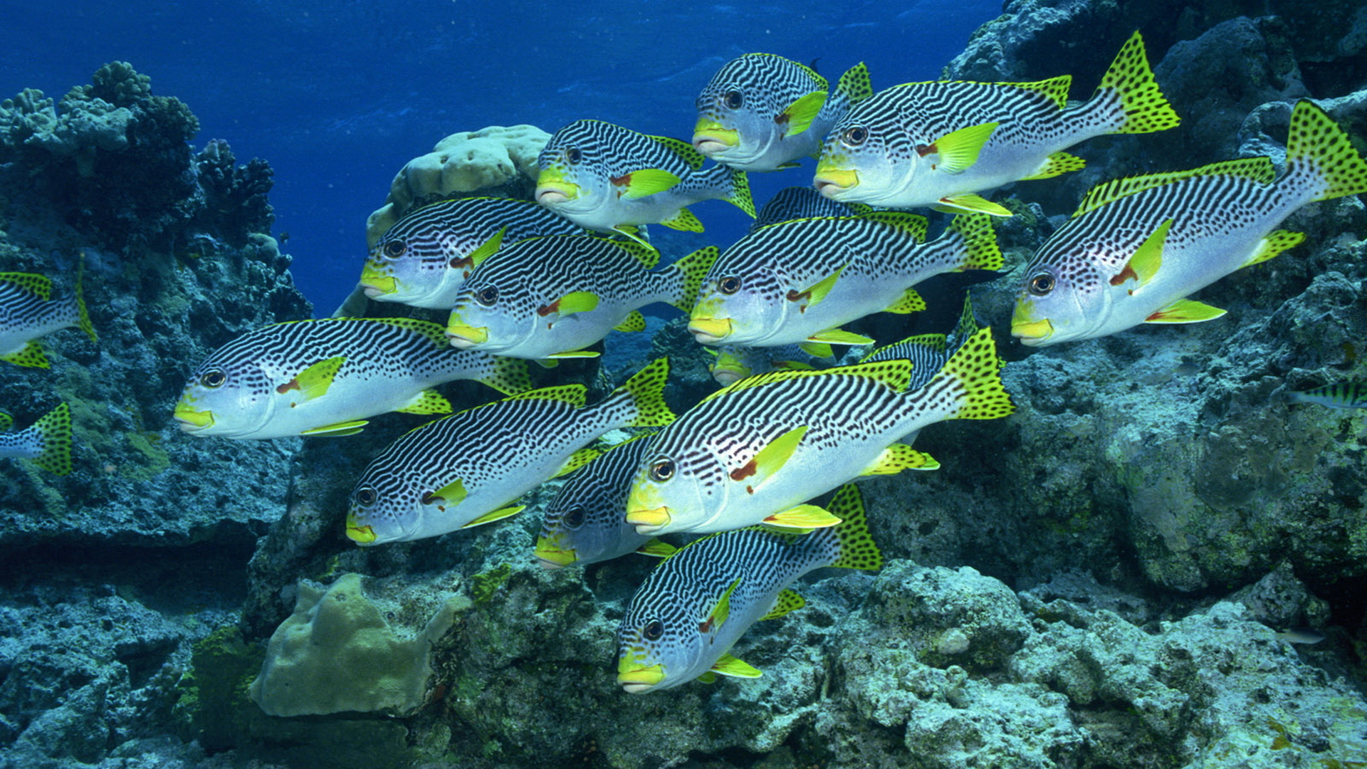 Fish Wallpaper Undersea 10741 Wallpaper Cool Walldiskpapercom 1920x1080