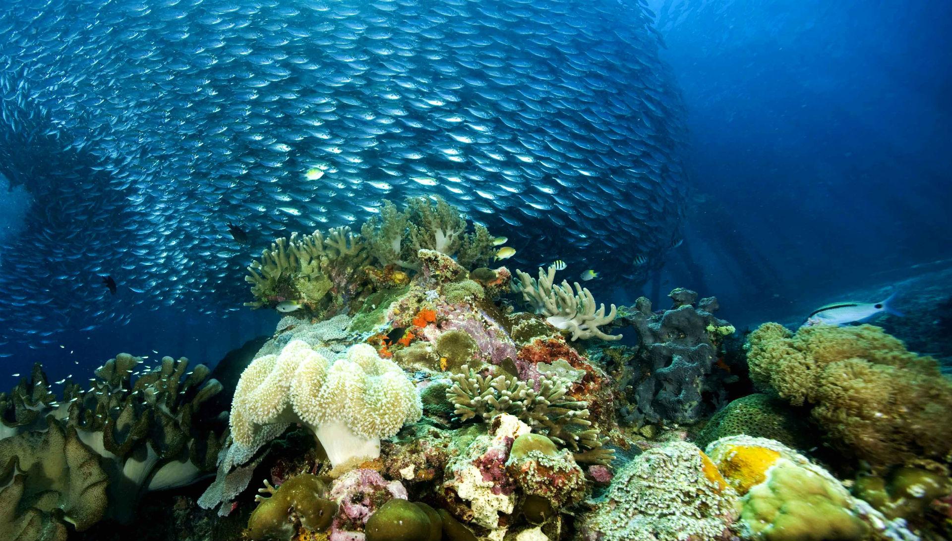underwater ocean sea nature coral reef tropical school wallpaper 1920x1092