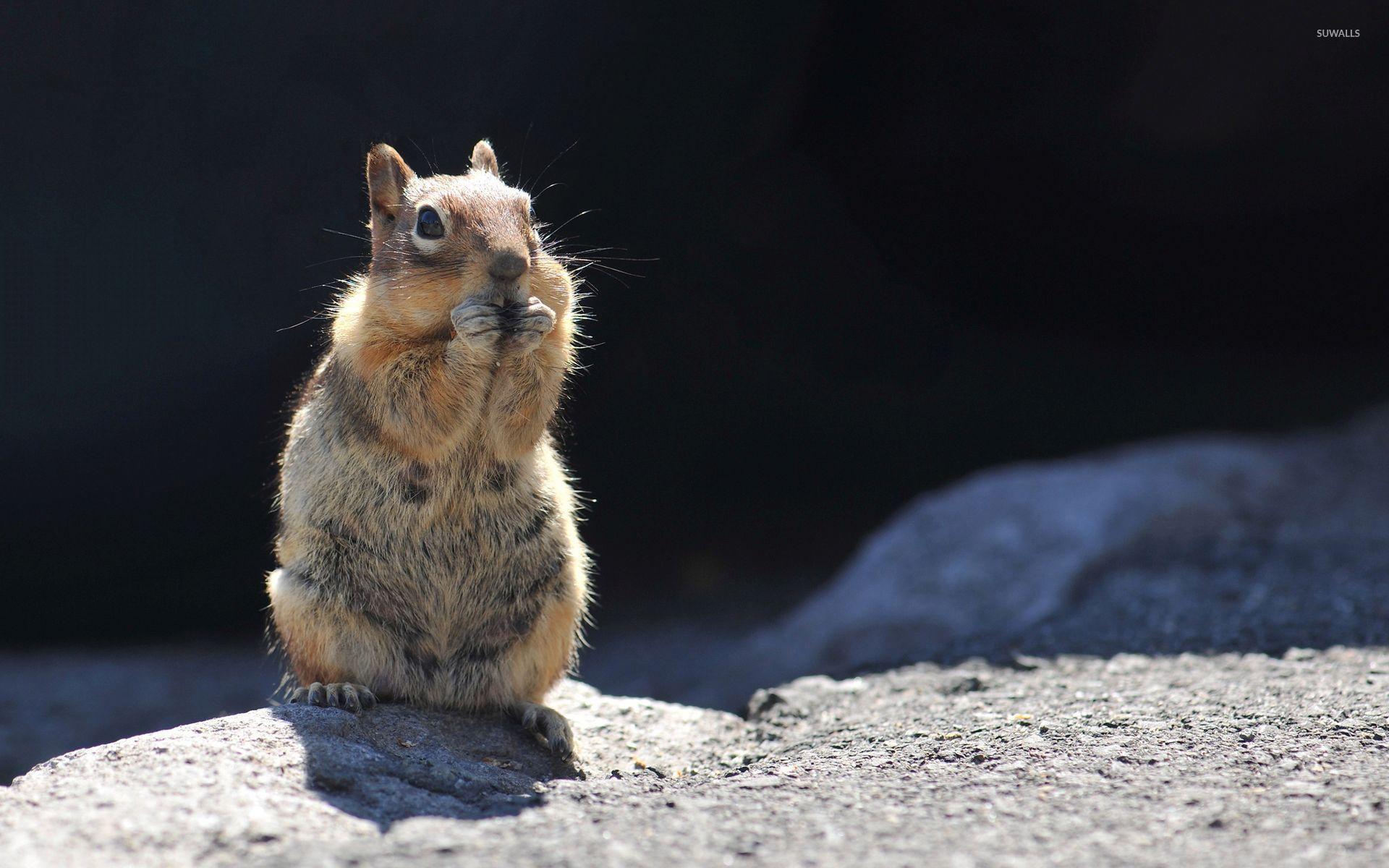 Cute Squirrel Wallpaper - WallpaperSafari