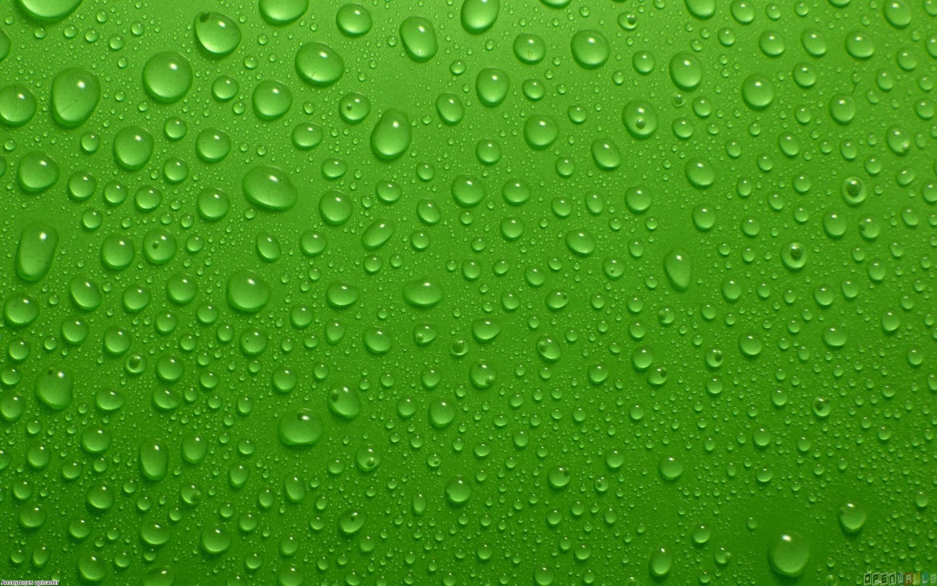 Green wall wet wallpaper 7555   Open Walls 1920x1200