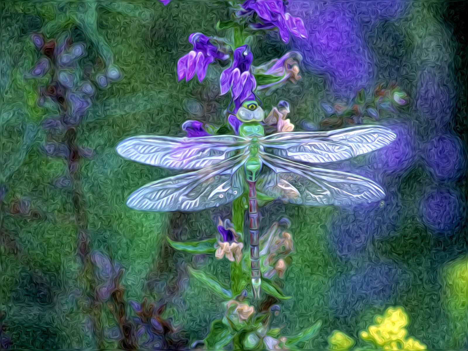 Dragonfly Wallpaper Spot 1600x1200