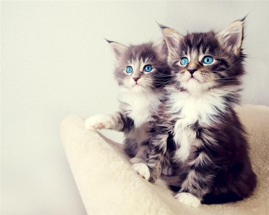 Most Beautiful Cats Wallpaper 900x720