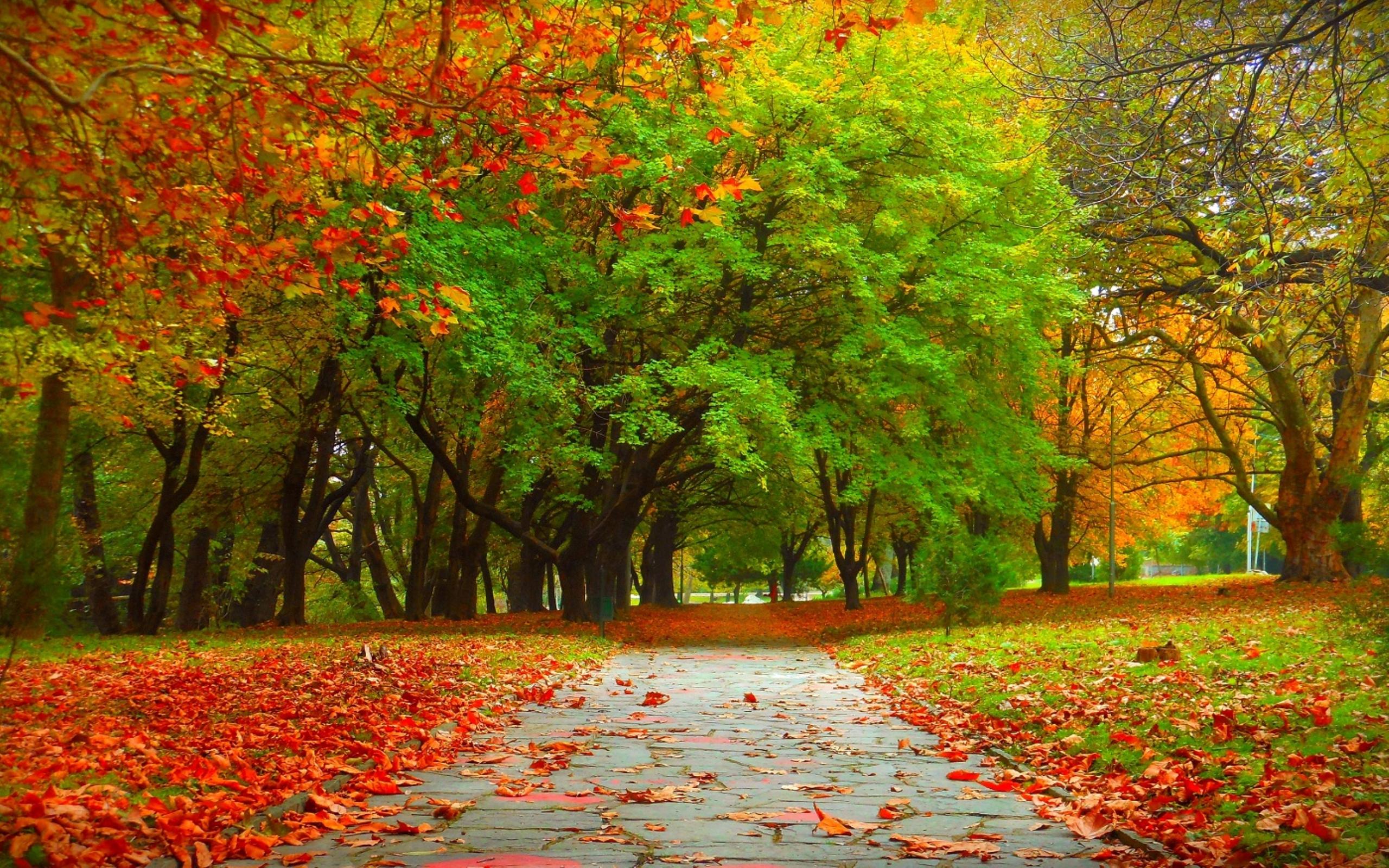 Tree Fall Autumn Nature 2560x1600 2560x1600