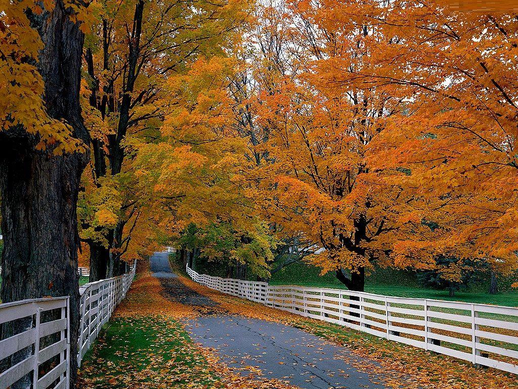 Fall Scenes Clip Art fall desktop wallpaper Autumn in 1024x768