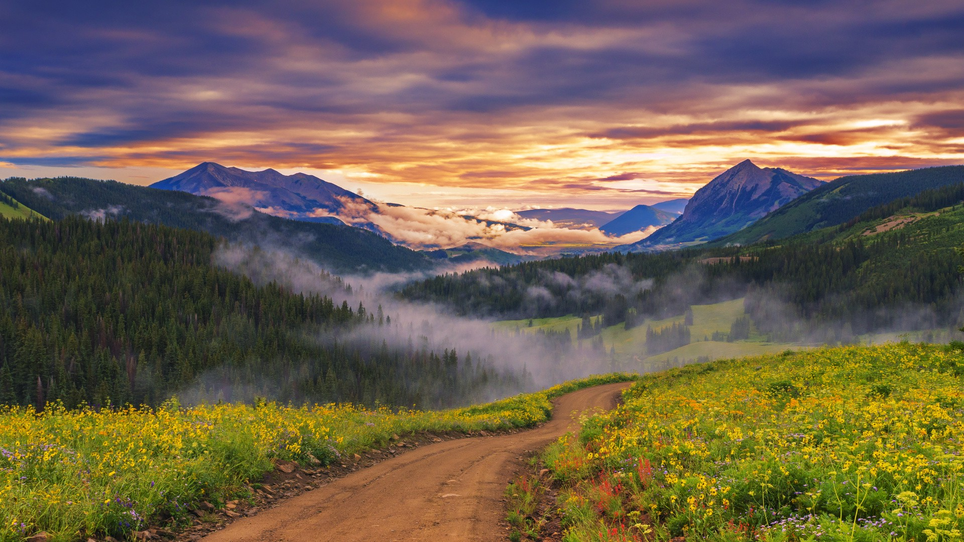 landscape Nature Wildflowers Path Mist Forest Trees Sunset 1920x1080