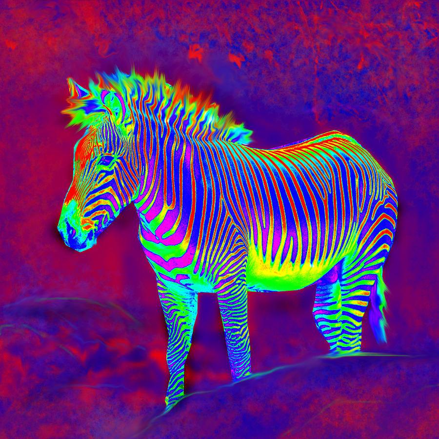Neon Zebra by Jane Schnetlage 900x900