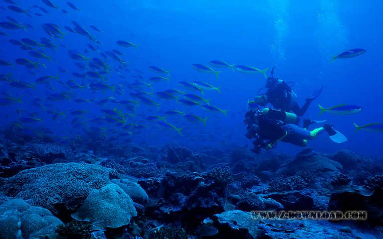 Download Underwater Desktop Wallpaper 72 Background Pictures 768x480